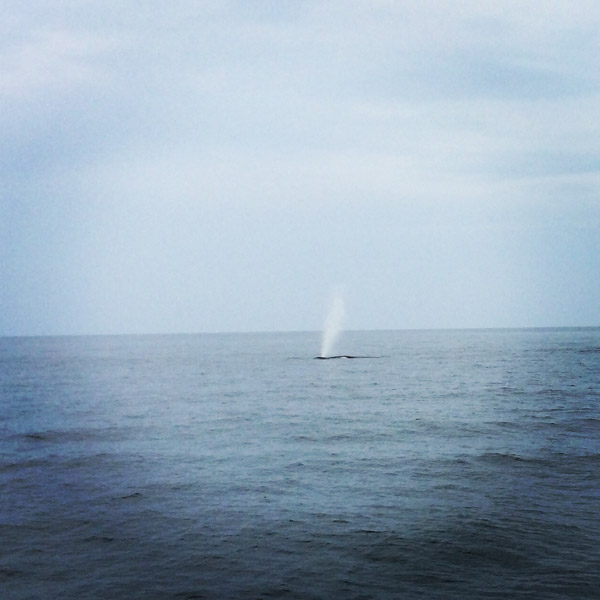 #schummer14 Whale Watch Rye New Hampshire