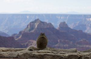 travel_nr gc squirrel looking over canyon.jpg