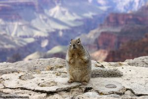 travel_nr gc squirrel on hind legs.jpg